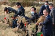 """""""越光宝盒""""上市 翠林农牧重新定义""""舌尖好米""""新趋势"""